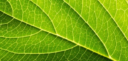 branched: green nature lead with veins