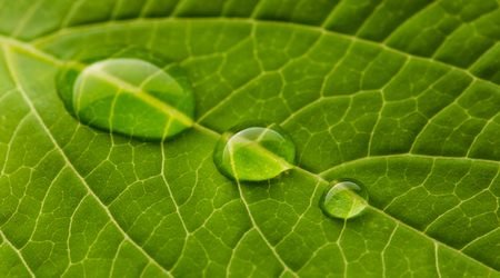 leaf water: green nature leaf with water drops