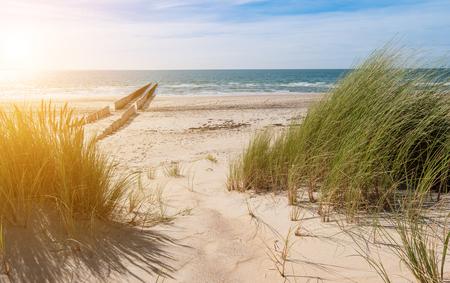 砂丘から見たビーチ