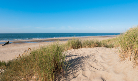 草のゼーラント州、オランダの砂丘 写真素材