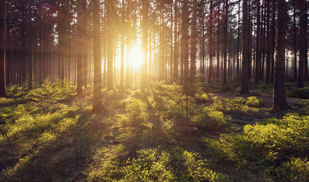 nature of sunlight: forest trees nature green wood sunlight view