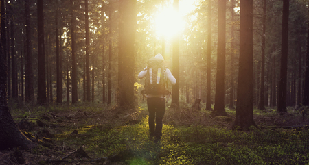 Sunny sunset in the woods with young hiker