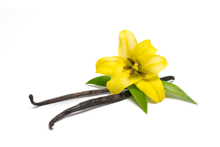 Vanilla pods and flower Stock Photo