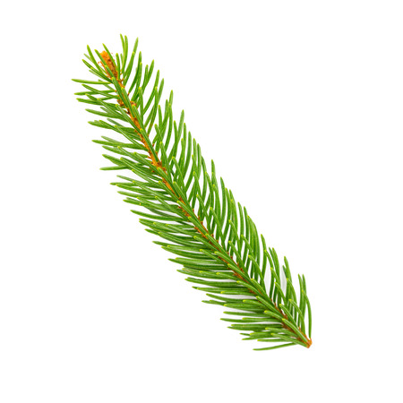 Fir branch on white background Stock Photo