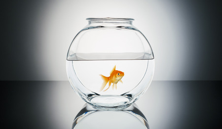 Goldfish in a fishbowl Stock Photo