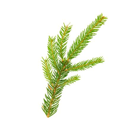 spruce tree branch on white background Stock Photo