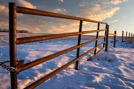 A steel gate attached to a barbed wire fence on the Alberta prairies in Rocky View County under a sunrise sky. 版權商用圖片