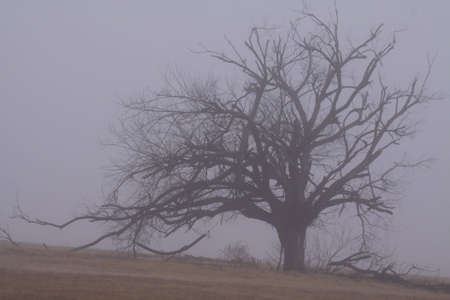 Scarry Old Tree