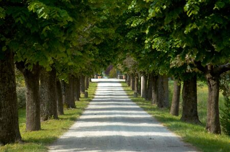 Tree lined gravel road.