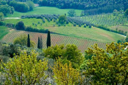 Vineyards in countryside around rural Tuscany, Italy.