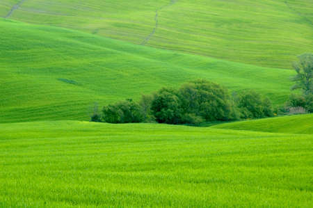 sloping: Green sloping wheat fields. Stock Photo