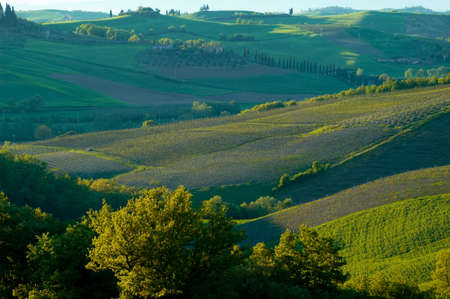 Rural countryside landscape in Tuscany region of Italy. Banco de Imagens - 1157380