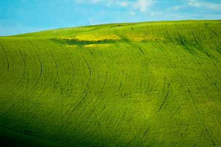 Green luxuriant sloping fields of wheat in the Tuscany region of Italy. This is in Val d'Orcia, a valley in the heart of Tuscany that is a UN World Heritage Site. Banco de Imagens - 1157422