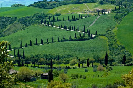 Cyprus-lined road in the Tuscany region of  Italy. photo