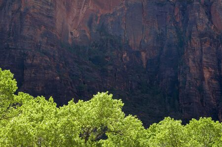 View of the red sandstone walls of Zion National Park in Utah.