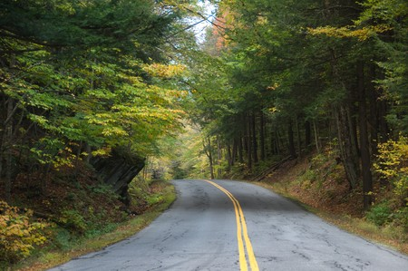road autumnal: Pave country road in an autumnal forest