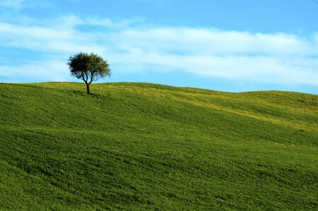Lone tree in field, in the Tuscany region of Italy. Banco de Imagens