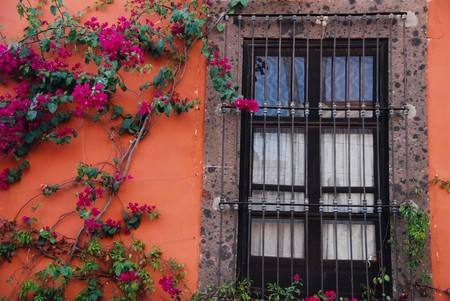 Window and bougainvillea vine 版權商用圖片