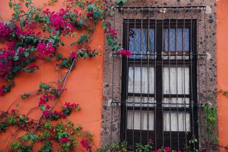 edifice: Window and bougainvillea vine Stock Photo