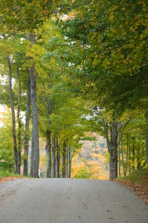 road autumnal: Gravel road beneath colorful autumnal trees Stock Photo