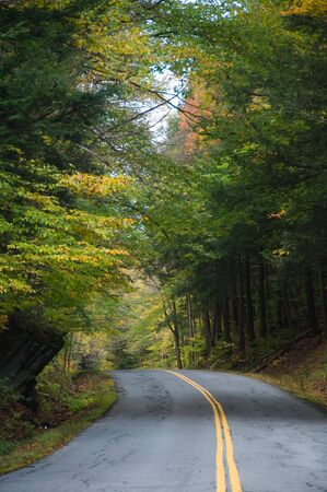 Pave country road in an autumnal forest