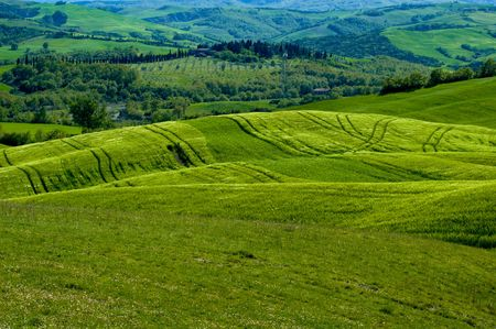 Green luxuriant sloping fields of wheat in the Tuscany region of Italy. This is in Val dOrcia, a valley in the heart of Tuscany that is a UN World Heritage Site. Stock Photo