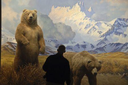 Silhouettes de gens debout en face de la dioramas au Natural History Museum de New York.