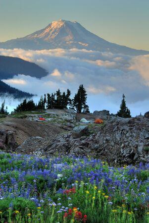 adams: Wildflowers, backpackers tents, Mt. Adams.