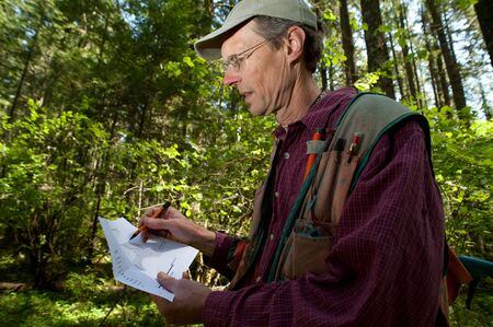 forester: Forester reading a map in a forest among Douglas fir trees