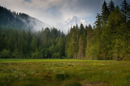 Meadow, forest, clouds and Mount Rainier