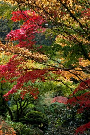 Trees with red and yellow leaves in the fall photo