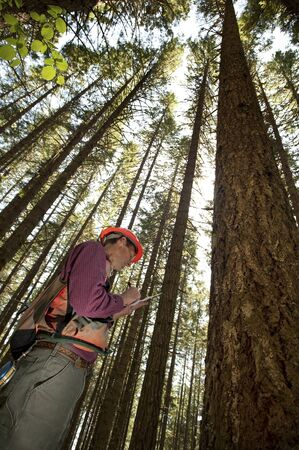 forester: Forester using an auger to tell the age of a Douglas fir