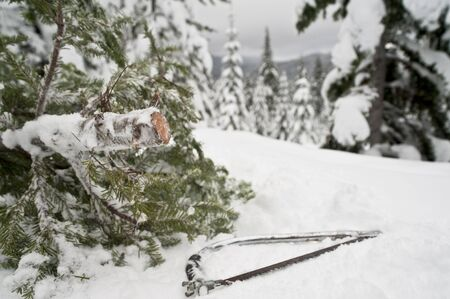 Small Christmas tree cut from a winter forest