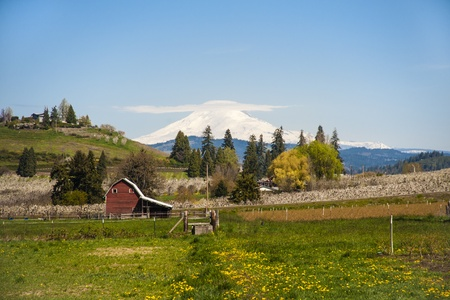 Red barn among apple orchards in Hood River Valley, OR photo