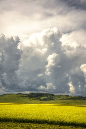 Big clouds over field of canola in Alberta Canada photo