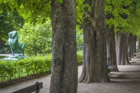 Path with trees in the Luxembourg Garden, Paris