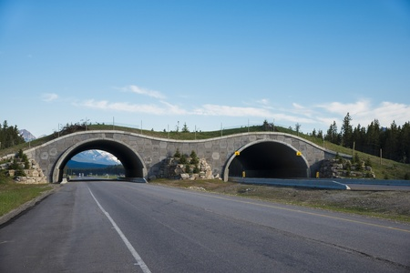 animal behavior: Highway crossing bridge for animals, Banff National Park, Canada Stock Photo
