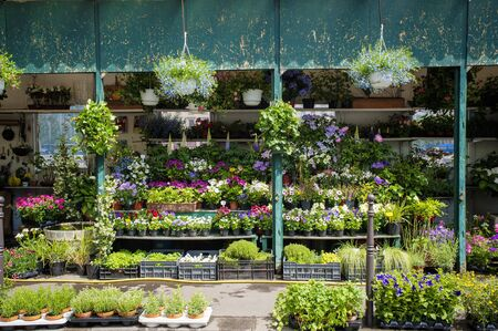Outdoor flower shop in Paris, France photo