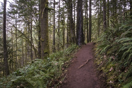 temperate: Trail through old growth temperate rainforest, Oregon