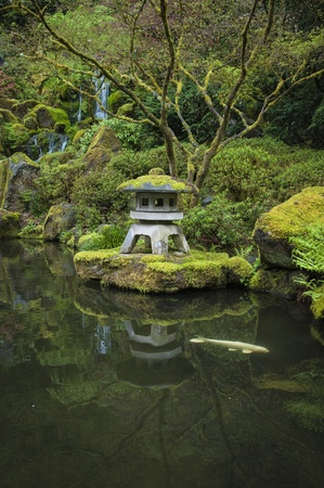 일본 정원에서 정원 연못에 잉어 스톡 콘텐츠