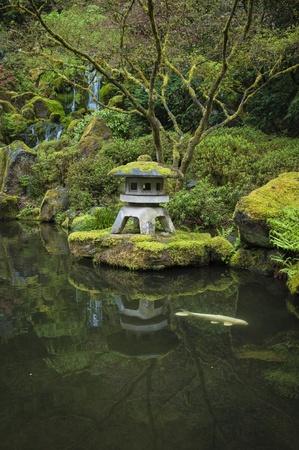 koi: Koi in a garden pond in a Japanese garden