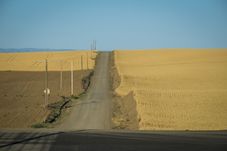 washington state: Road through wheat fields ready for harvest in Washington State Stock Photo