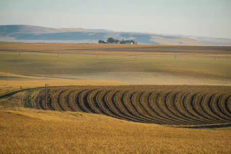 washington state: Brown wheat fields in autumn in Eastern Washington state
