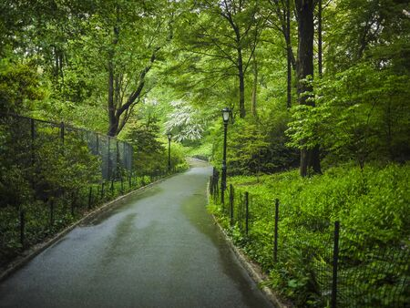Sidewalks and forests in spring, Central Park, New York City photo