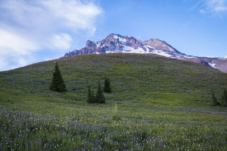 cascade range: Summer wildflowers on Mt. hood in the cascade range of Oregon