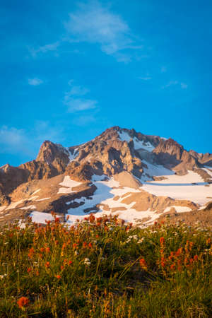 Sunset glow on wildflowers and Mt. hood, Oregon Stock Photo - 22760783
