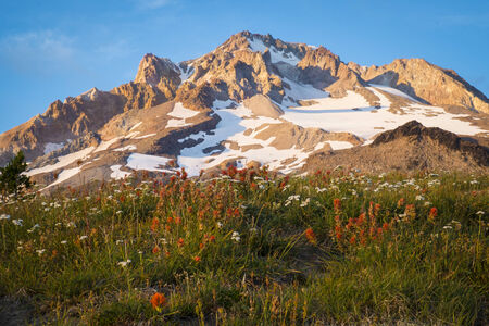 Sunset glow on wildflowers and Mt. hood, Oregon Stock Photo - 22760784