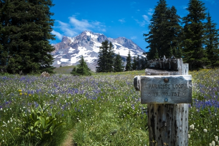 pct: Paradise loop trail sign, Mt. hood, Oregon Cascades