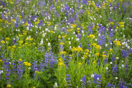 Field of white, yellow and purple blue wildflowers Stock Photo - 22760962