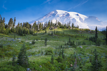 Beautiful wildflowers and Mount Rainier, Washington state Stock Photo